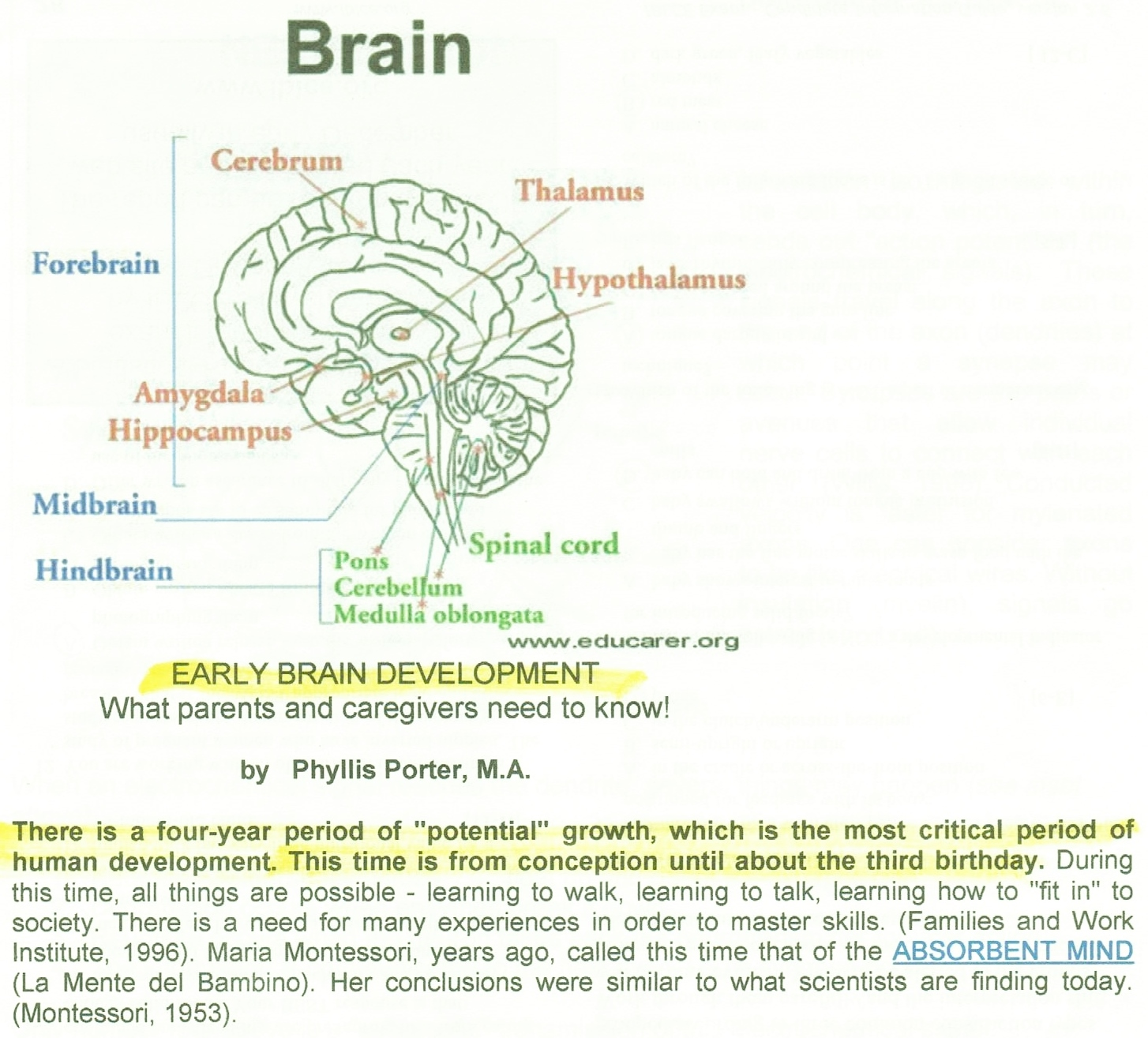 Memory vitamins target image 3